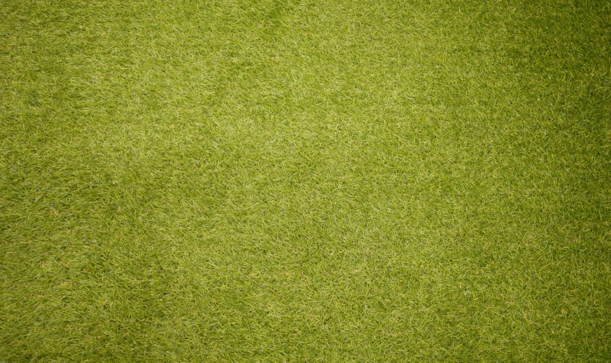 Jak wybrać kosiarkę do trawy?